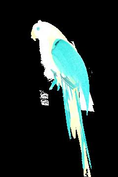 summer parrot