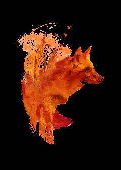 plattensee fox