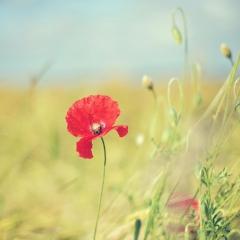 Poppy Seed 2